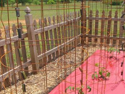 cages pour faire pousser les tomates