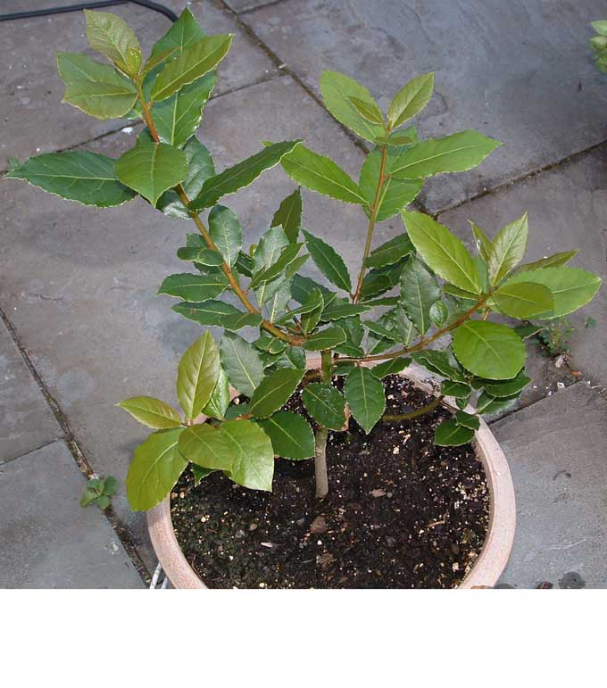 comment faire pousser des plantes aromatiques en int 233 rieur conseils et astuces bricolage