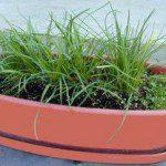 comment faire pousser des plantes aromatiques en int rieur blog conseils astuces bricolage. Black Bedroom Furniture Sets. Home Design Ideas