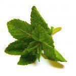 Comment faire pousser des plantes aromatiques en int rieur conseils et astuces bricolage - Comment faire pousser de la menthe ...