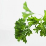 Comment faire pousser des plantes aromatiques en int rieur - Comment faire pousser de la menthe ...