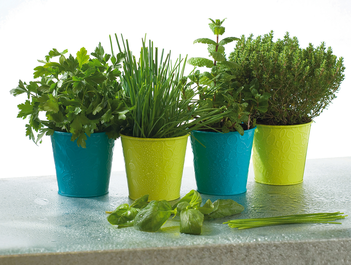 http://www.forumbrico.fr/wp-content/uploads/2010/06/plantes-aromatiques.jpg