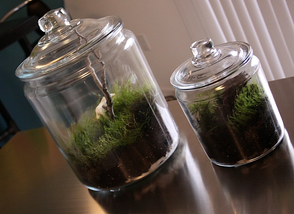 fabriquer un mini terrarium design forumbrico. Black Bedroom Furniture Sets. Home Design Ideas