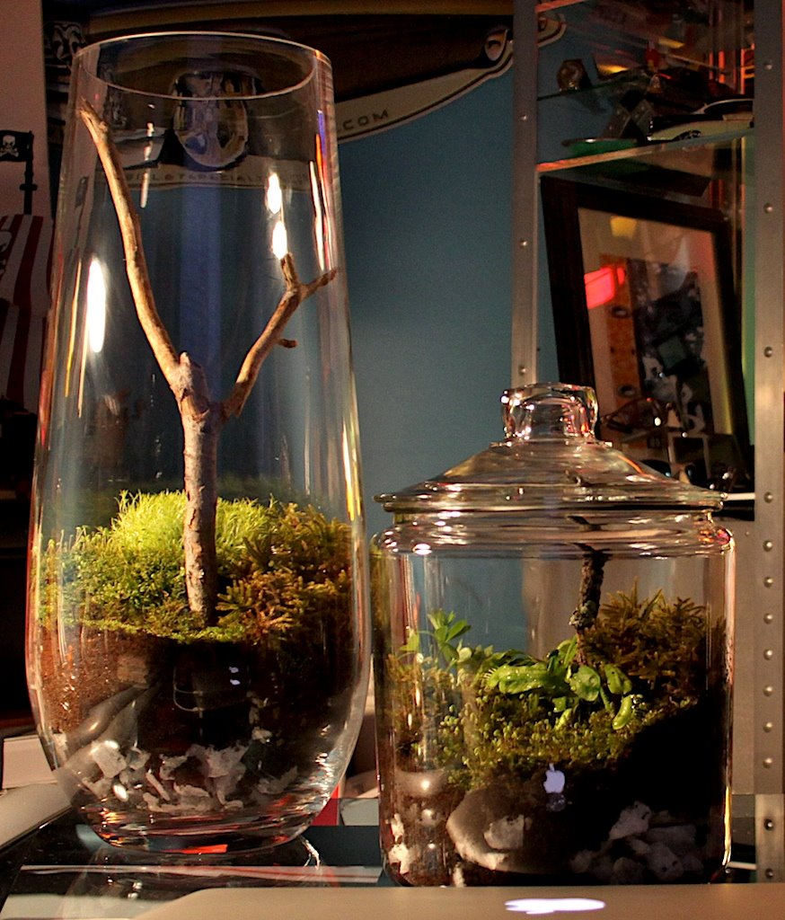 fabriquer un mini terrarium design forumbrico. Black Bedroom Furniture Sets. Home Design Ideas