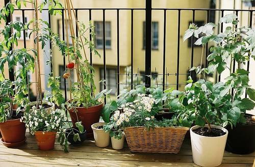 potager sur balcon