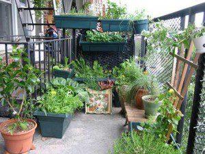 potager sur terrasse
