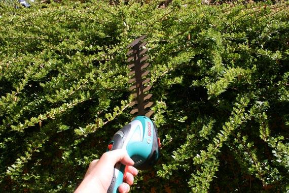 Test-Bosch-sculpte-haies-taille-herbes-sans-fil-ASB-10,8-LI
