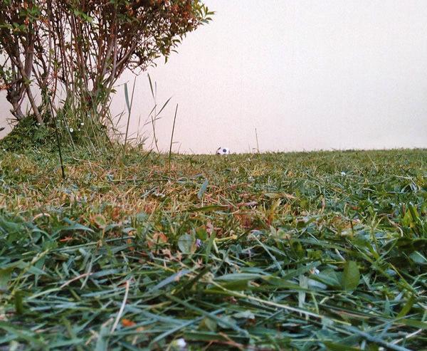 Tondeuse-manuelle-pelouse-avant-apres