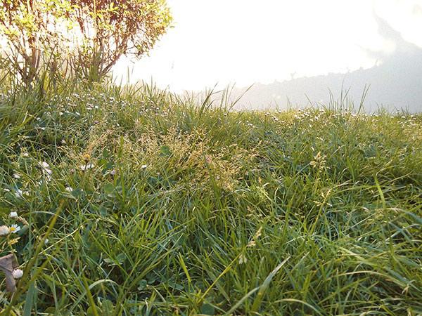 Tondeuse-manuelle-pelouse