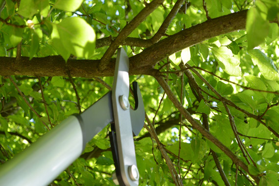 coupe-branches-Fiskars-PowerGear-TM-LX-98
