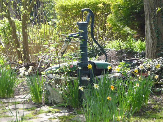 narcisses-conseils-jardin