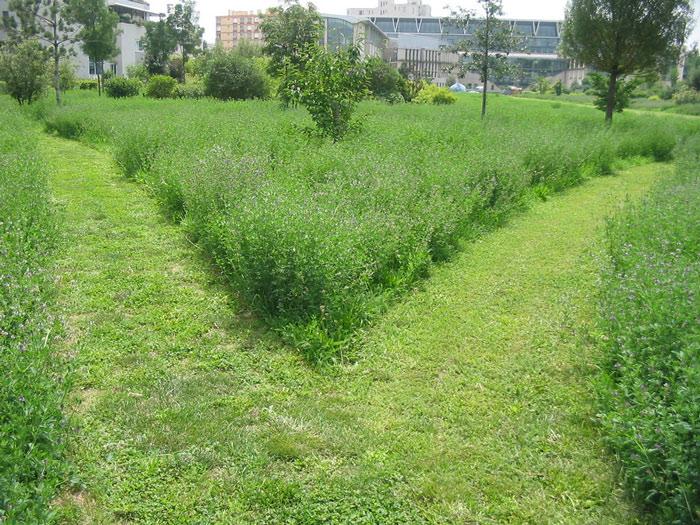 Jardin-mouvement-vivant-écolo-ENS-Lyon