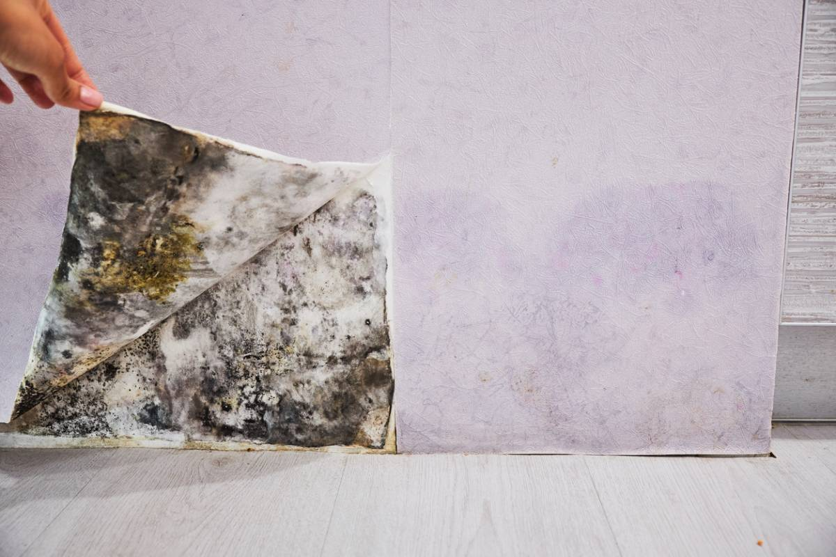 Humidité Dans Une Maison comment traiter l'humidité dans la maison ? – forumbrico
