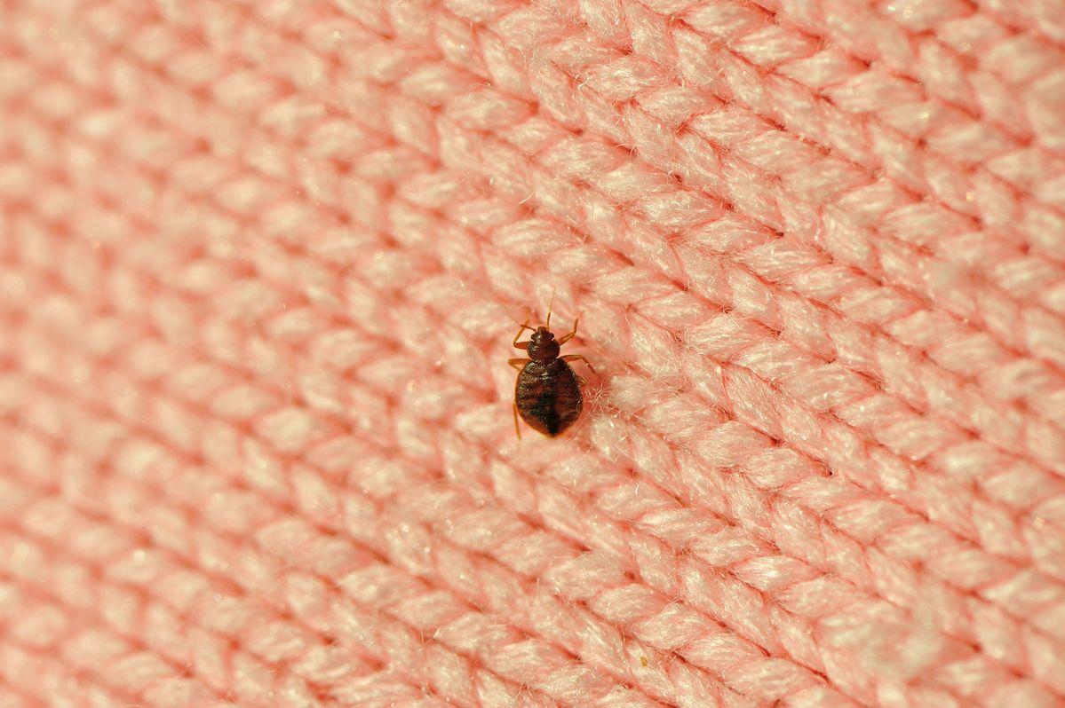 lutter contre punaises de lit (1)