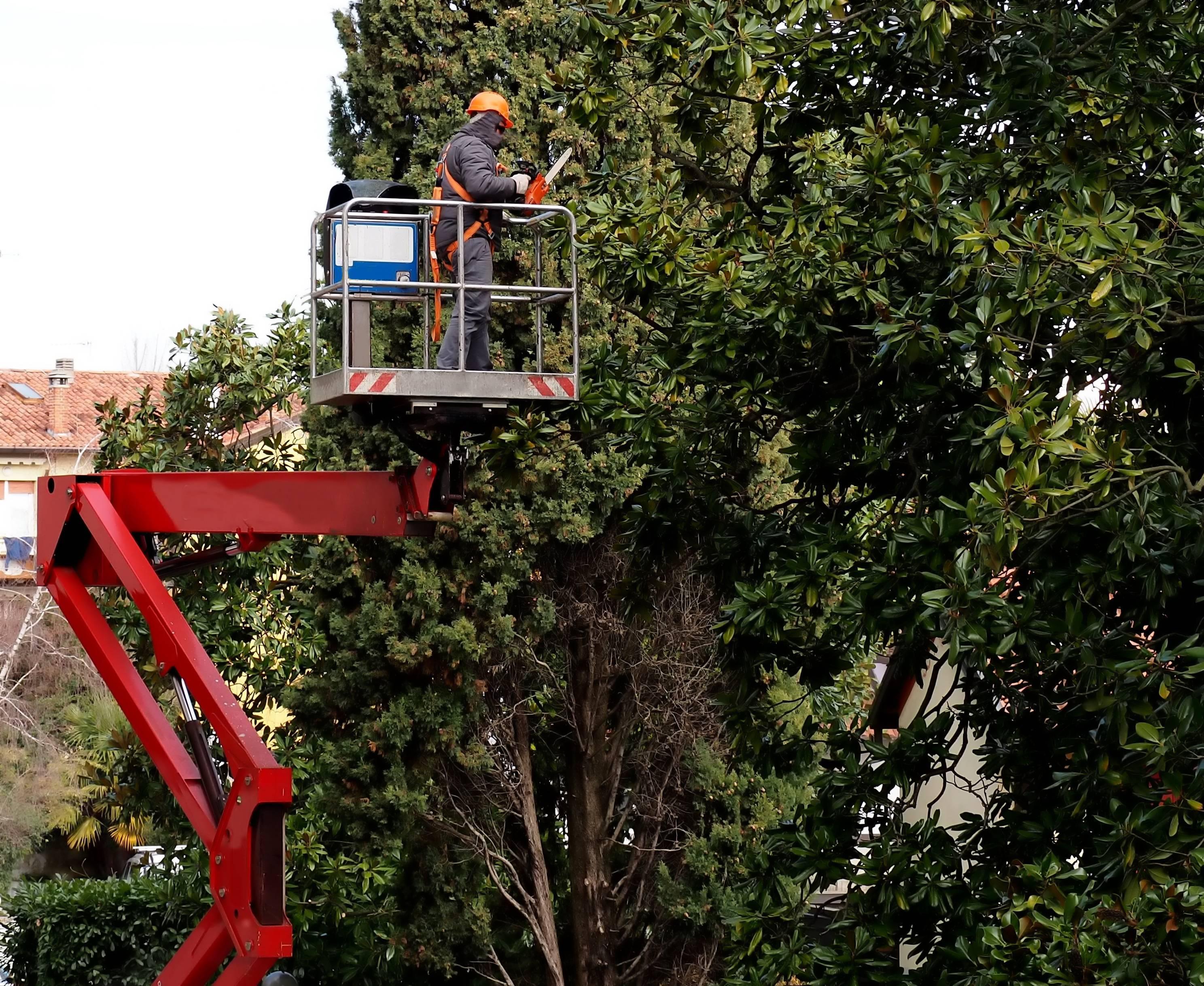élagage des arbres, obligations