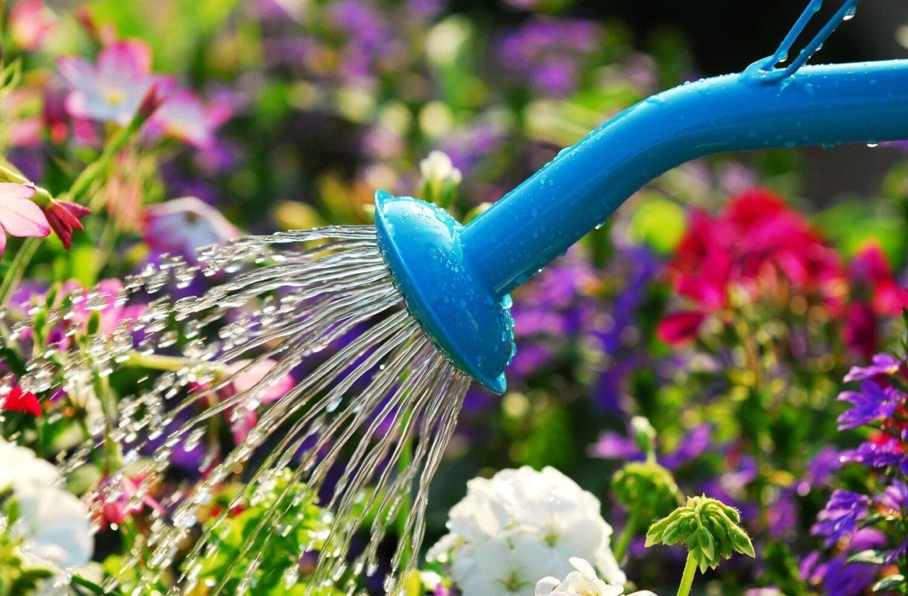 tuto prendre soin des fleurs